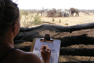 Recording data is an important task while volunteering with elephants