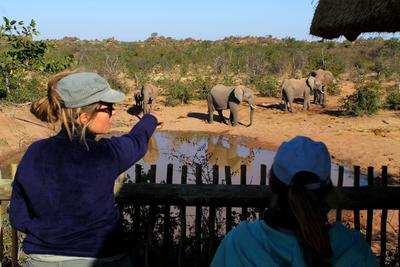 Volunteer with elephants to conduct surveys and identification procedures
