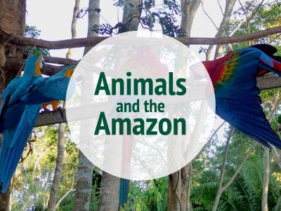Options for combining projects working with animals in Peru and Argentina