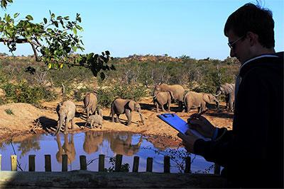 A Projects Abroad volunteer takes part in an elephant research activity at their placement in Botswana