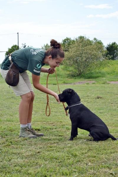 A female volunteer takes care of a dog at her project