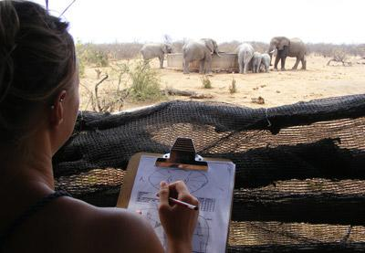 A student volunteering in Africa studies animals at a watering hole in Botswana.