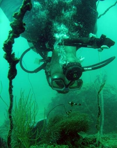 Volunteer under water during a dive on the Conservation & Environment project in Asia