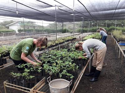 Students plant seedlings at a nursery in Ecuador during their short-term volunteer abroad trip