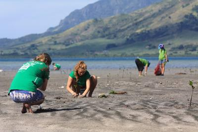 Students plant mangroves on their volunteer vacation in Fiji