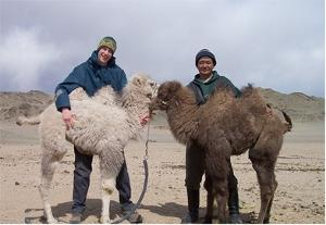 Volunteer with local staff and animals on the Nomad project in Mongolia