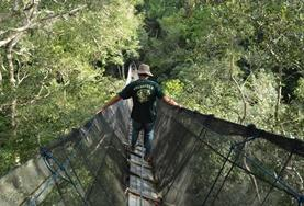 A Conservation volunteer travels across a treetop walkway in the Amazon, Peru.