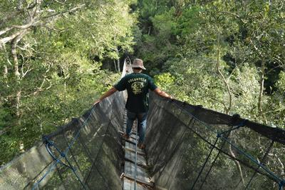 Above the canopy of the Amazon Rainforest a volunteer observes wildlife on the Conservation in Peru Alternative Spring Break Trip