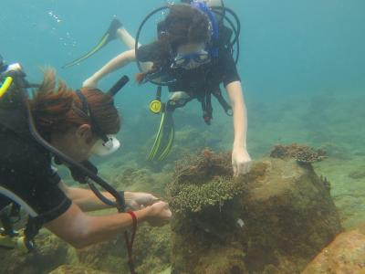 Projects Abroad Marine Conservation volunteers conduct underwater research during a dive in Cambodia, Asia.