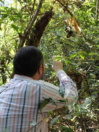 A Projects Abroad staff member views local wildlife in a rainforest in Madagascar.