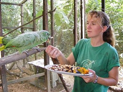 Wildlife conservation volunteer in Peru feeds parrot in the Amazon jungle