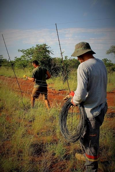 Projects Abroad Conservation volunteers remove a fence that is threatening wildlife in Botswana, Southern Africa.