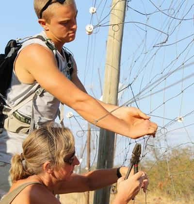 Volunteers inspect a tree in nature on the Conservation & Environment project in South Africa