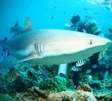 Volunteers findings of specials of Fish, Sharks, Turtles & Rays on the Conservation project in Thailand