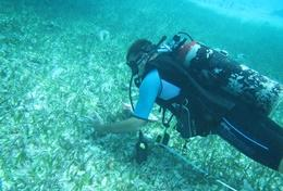 A Diving and Marine Conservation volunteer in Belize gathers scientific data during a dive