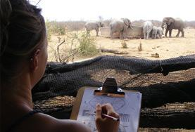 Volunteers on the African Bushveld Conservation Project record data on elephants in Southern Africa.