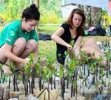 Mangrove Flora Species