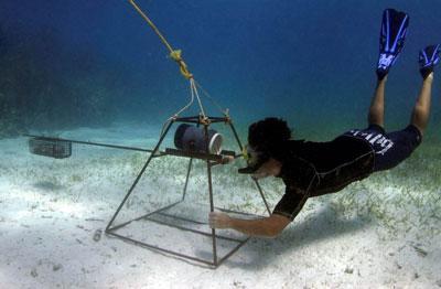 Volunteer on the Shark Conservation project observes ocean life underwater in Fiji