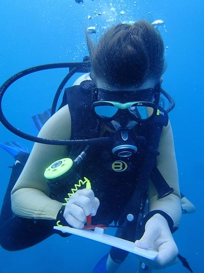 A volunteer on the Shark Conservation project in Fiji participates on a diving activity.