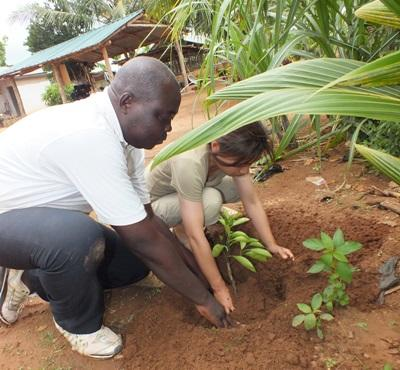 A local farmer helps a Projects Abroad Agriculture & Farming volunteer plant an orange tree in Togo, Africa