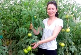 A farming volunteer in Jamaica poses with a tomato plant in a greenhouse.