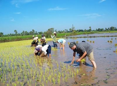 Volunteers join Cambodian locals in rice planting