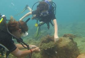 Conservation & Community High School Special volunteers in Cambodia dive with staff members.