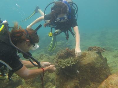Projects Abroad High School Special volunteers participate in a survey dive in Cambodia, Asia.
