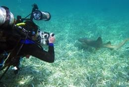 A Conservation & Community High School Special volunteer observes marine life during a dive in Belize.