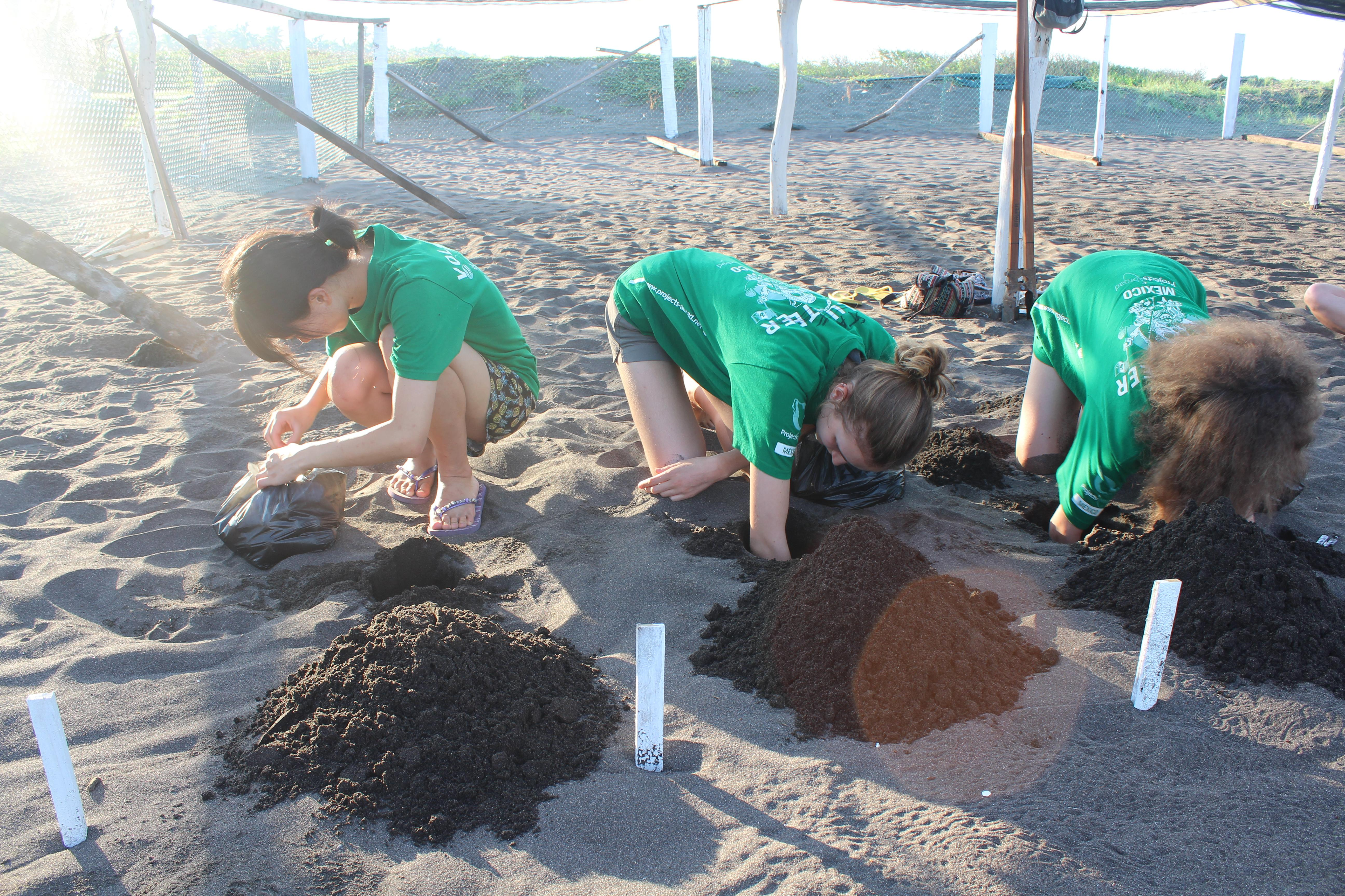 Projects Abroad High School Special volunteers dig holes for turtle eggs in Mexico at the Conservation Project
