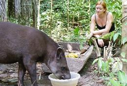 A High School Special Conservation volunteer assists at an animal centre in the heart of the Amazon forest.