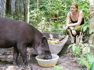 High School Volunteer on the Conservation project in Peru feeding animals in the jungle