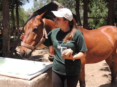 Projects Abroad volunteer assists with the care of a therapy horse in Bolivia.