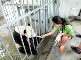 A Veterinary Medicine & Animal Care intern observes a rehabilitated wild animal at a clinic.