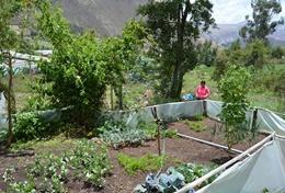A professional dietitian uses her expereince and skills at her placement in Peru.