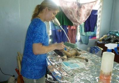Treating a sick cat on the veterinary medicine project in Samoa