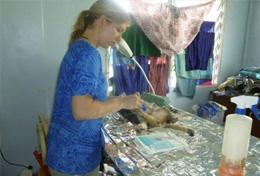 A professional vet volunteering abroad examines an injured animal at a clinic.