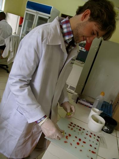 A Projects Abroad Medicine intern tests samples at a medical facility in Tanzania, Africa.