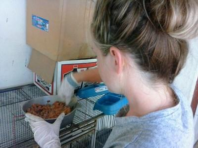 Projects Abroad Animal Care volunteer gets food ready for domestic animals at a rescue center in Jamaica.