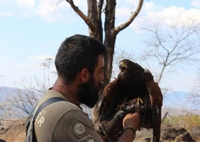 A staff member at Projects Abroad's Falconry Project in Mexico holds a falcon that is in the process of being trained.
