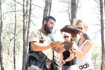 A Projects Abroad volunteer on the Falconry Project in Mexico gets assistance from a local staff member during a training session.