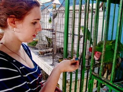 Volunteer feeds a caged bird on the animal rehabilitation center in Mexico
