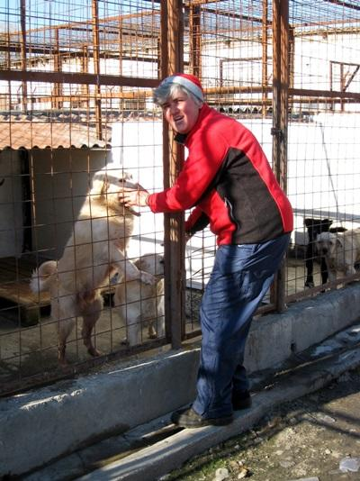 Volunteer treats dogs in  cages in Romania