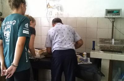 Projects Abroad Veterinary Medicine interns watch a Sri Lankan vet treat an injured dog at an animal clinic.