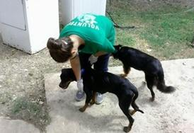 An Animal Care volunteer exercises dogs at a shelter in Jamaica.