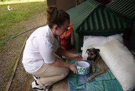 A Veterinary Medicine & Animal Care intern gives water to an injured dog in Samoa.