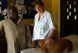 Volunteer in Ghana: Veterinary Medicine