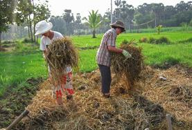 Agriculture & Farming volunteers work at their placement in a developing country.