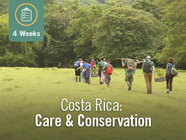 Care & Conservation in Costa Rica (4 Weeks)